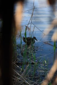 Fauna sul lago